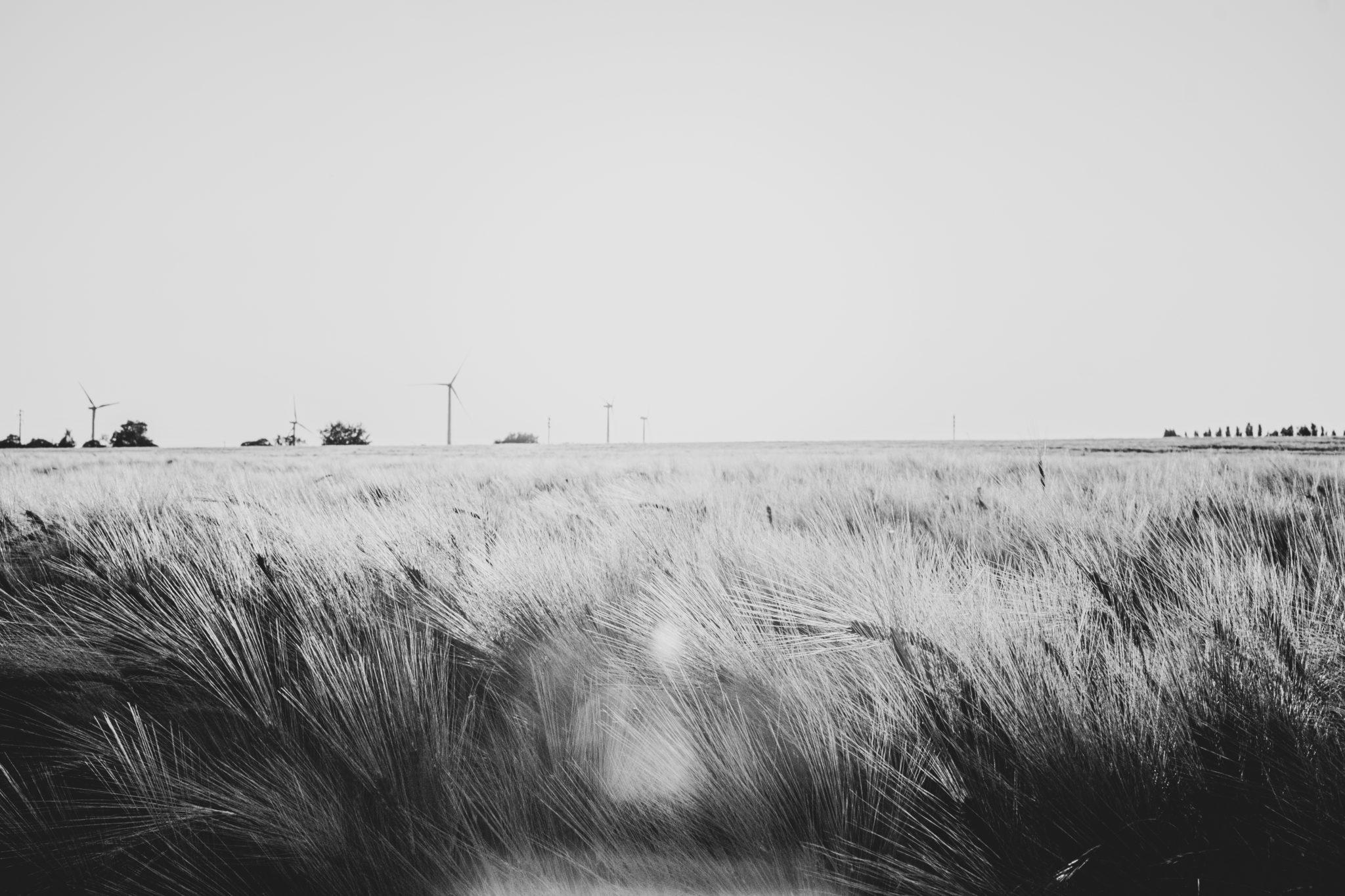 Fields & Light
